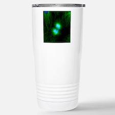 Cell division, fluoresc Travel Mug