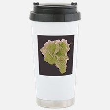 Cheek squamous cells, S Stainless Steel Travel Mug