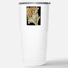 Aspergillus fungus, SEM Travel Mug