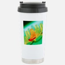 Collection of male cond Stainless Steel Travel Mug