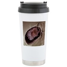 Osteocyte, SEM Travel Coffee Mug