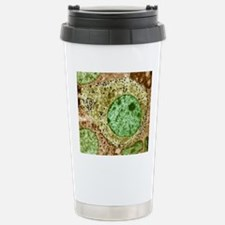 Pituitary gland, TEM Travel Mug