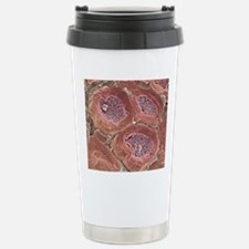 Myelinated nerves, SEM Travel Mug