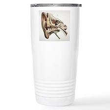 Ear anatomy, 1844 artwo Travel Coffee Mug