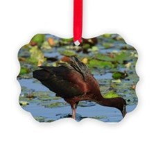 Glossy Ibis feeding in lily pads, Ornament