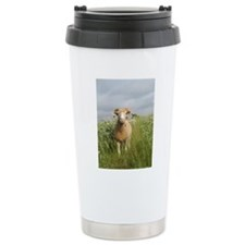 Ewe in the tall grass Travel Mug