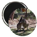 kangaroo mum tickles me Magnet