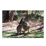 kangaroo mum tickles me Postcards (Package of 8)