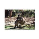 kangaroo mum tickles me Rectangle Magnet (10 pack)