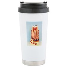 Tooth anatomy Travel Mug