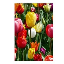 Cute Tulip garden Postcards (Package of 8)