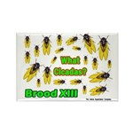 What Cicada Rectangle Magnet (10 pack)
