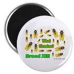 What Cicada Magnet