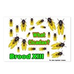 What Cicada Postcards (Package of 8)