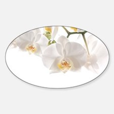 Orchids Reflection Decal