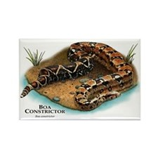 Boa Constrictor Rectangle Magnet
