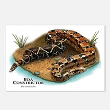 Boa Constrictor Postcards (Package of 8)