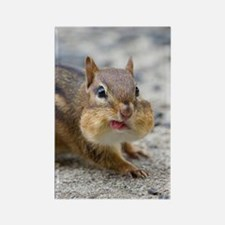 Funny Chipmunk Rectangle Magnet