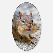 Funny Chipmunk Sticker (Oval)