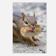 Funny Chipmunk Postcards (Package of 8)