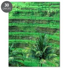 Terraced rice fields and coconut palm trees Puzzle