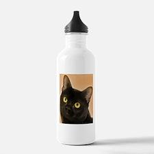 Bombay Cat Water Bottle