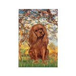 Spring and Ruby Cavalier Rectangle Magnet