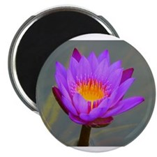 Purple Lotus Flower Magnets