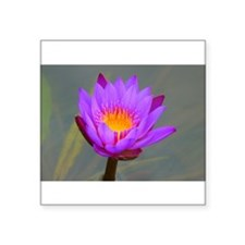 Purple Lotus Flower Sticker