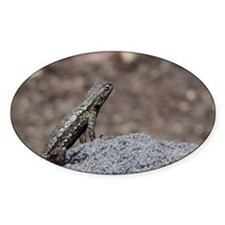 Lizard Oval Decal