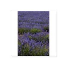 Lavender Land Sticker