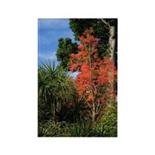 Beauty In Nature Autumn Colors Rectangle Magnet