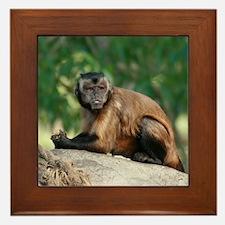 Cute Brown Capuchin Monkey Framed Tile