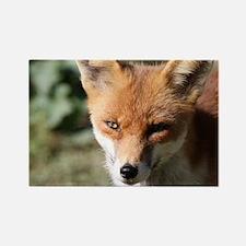 Fox001 Magnets