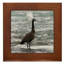 A Canadian goose Framed Tile