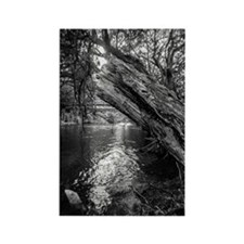 Cute Black and white photography Rectangle Magnet