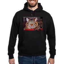 Maine-Coone Cat Hoodie