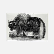 Vintage Yaks Illustration - 1800s Yak Images Magne