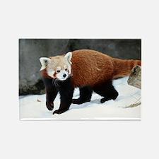 Red Panda Magnets