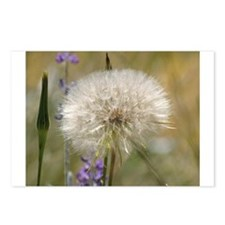 Dandelion Ball Postcards (Package of 8)