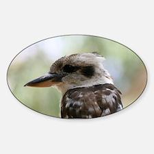 Kookaburra in Old Gum Tree Australi Sticker (Oval)