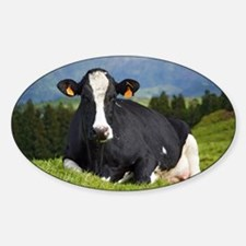 Holstein cow Decal