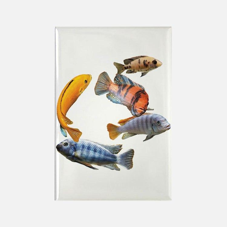Cichlids Magnets