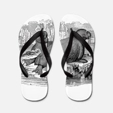 Unique Walrus Flip Flops