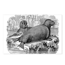 Unique Walrus Postcards (Package of 8)
