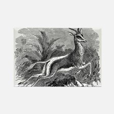 Vintage Antelope Illustration - 1800s Gazelle Magn