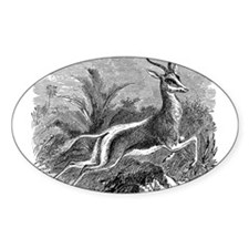 Vintage Antelope Illustration - 1800s Gazelle Stic