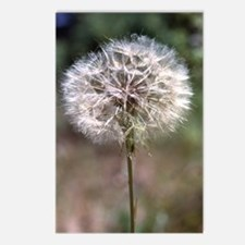 Dandelion Postcards (8)