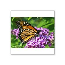 "Cute Butterfly pictures Square Sticker 3"" x 3"""