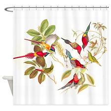 Gould Sunbird Birds Shower Curtain